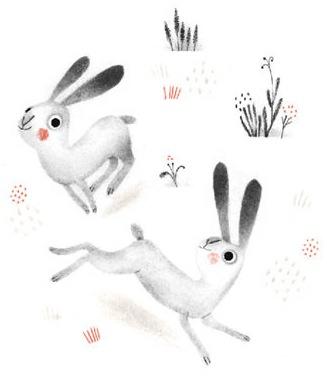 Northern-night-rabbits