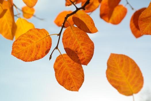 leaves-228111_960_720