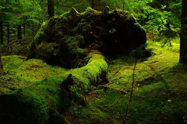 forest-moss-norway-40513.jpeg
